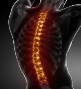 Spine - Chiropractor.Ajax.Pickering